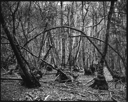 150115 bois des chênes 1