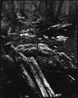 150115 bois des chênes