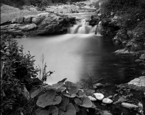A stream next to Santomoro (Pistoia) (from an 8x10 negative)